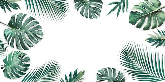 Tropikalne liście z białej kopii przestrzeni, tło transparent