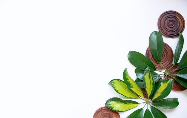 Tropikalne liście z drewnianymi deskami na białym tle. liść dżungli z bliska. koncepcje natury botanicznej. projektowanie elementów kwiatowych, zielone liście. kopiuj wklej.