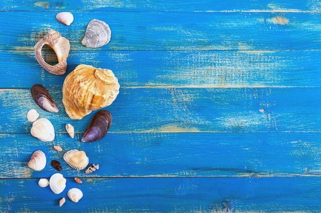 Tropikalne morze w tle. różne muszle na niebieskich deskach, widok z góry. wolne miejsce na napisy. motyw letni.