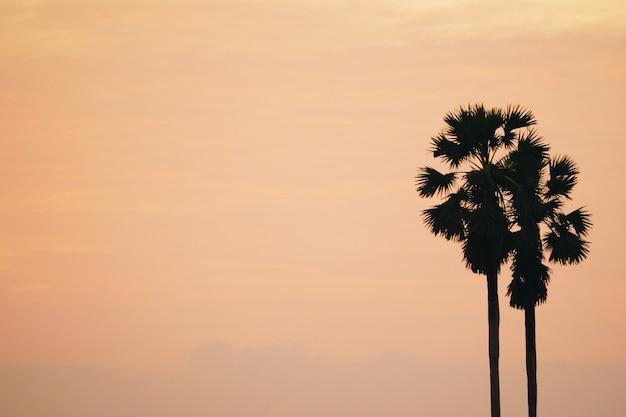 Tropikalne palmy kokosowe na tle zachodu słońca nieba