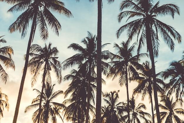 Tropikalne palmy kokosowe na zachodzie słońca niebo flary i tło natura bokeh.