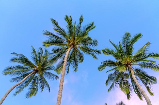 Tropikalne palmy na niebiesko-fioletowym niebie słońca. zachód słońca w tropikach