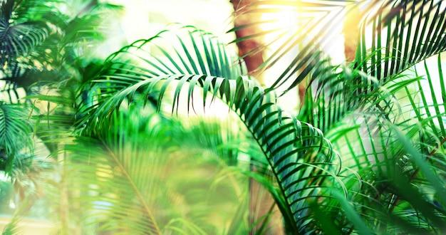 Tropikalne palmy z efektem bokeh słońca i lekkie wycieki. letnie wakacje, koncepcja podróży przygodowych.