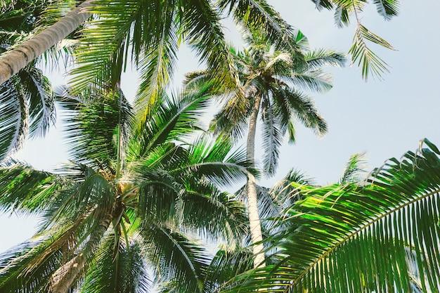 Tropikalne palmy