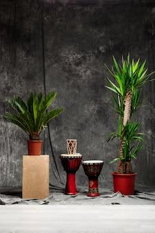 Tropikalne rośliny i bębny na szarej ścianie