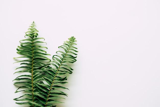 Tropikalne rośliny na bielu