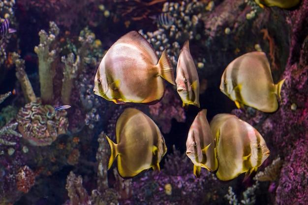 Tropikalne ryby w akwarium morskim