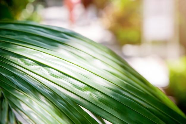 Tropikalne tło naturalne. zielone liście, palmy i światło słoneczne.