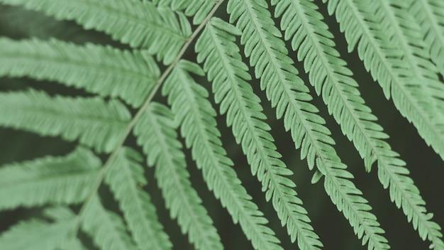 Tropikalne zielone liście. natura streszczenie tapeta