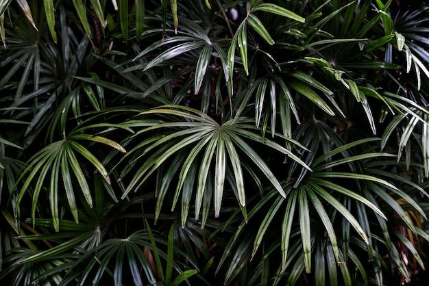 Tropikalne zielone liście palmowe w tle