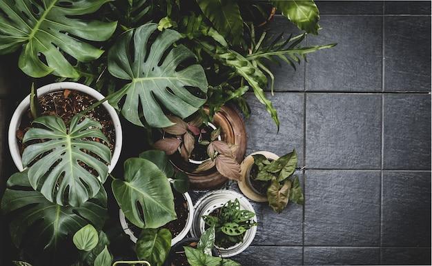Tropikalne zielone liście z góry - widok z góry