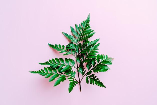 Tropikalne zielone liście