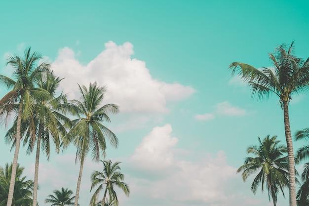 Tropikalny drzewko palmowe z lata niebieskiego nieba tłem.