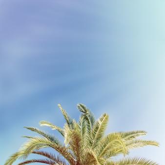Tropikalny drzewko palmowe z światłem słonecznym na niebieskim niebie. letnie wakacje i charakter podróży koncepcja. rocznika brzmienia filtra skutka abstrakcjonistyczny tło z kopii przestrzenią.