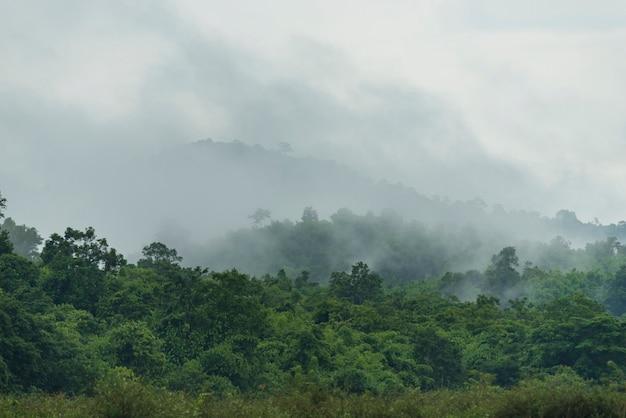 Tropikalny głęboki las deszczowy, warstwy drzew baldachimu i góry, koncepcja wolności i spa