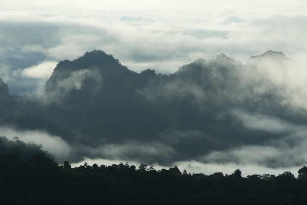 Tropikalny góra las w tajlandia