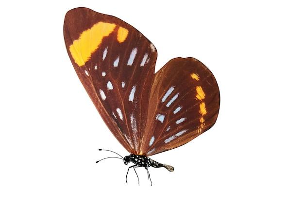 Tropikalny kolorowy motyl na białym tle
