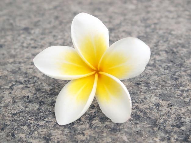 Tropikalny kwiat frangipani