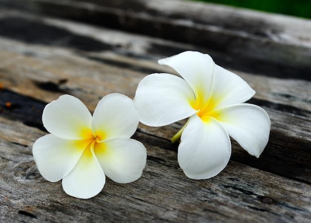 Tropikalny kwiatu frangipani na drewnie
