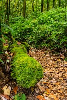 Tropikalny las deszczowy w północnym tajlandia