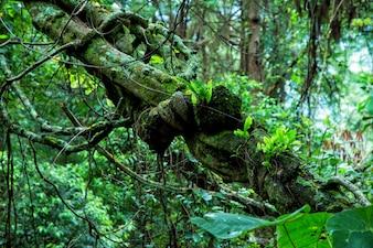 Tropikalny las deszczowy w Tajlandii