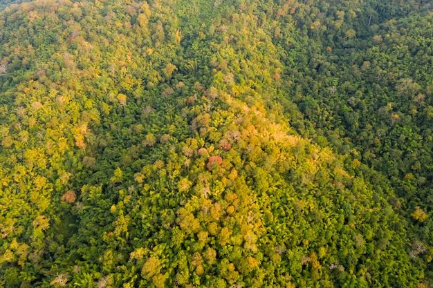 Tropikalny las tropikalny w jesień kolorach sezonu widok z lotu ptaka