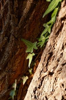 Tropikalny las w świetle dziennym