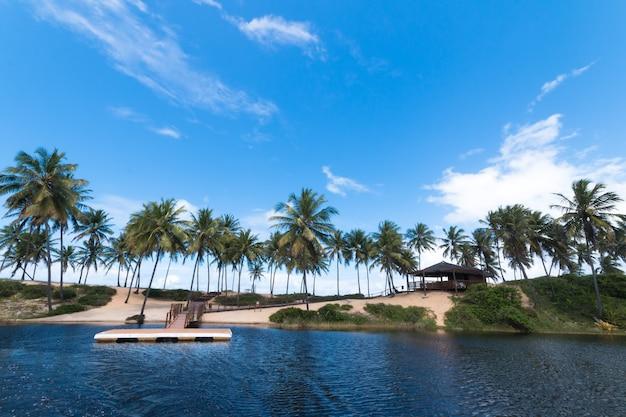Tropikalny letni krajobraz z palmami kokosowymi i niebieskim niebem.