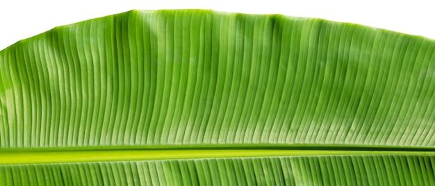 Tropikalny liść bananowca na białym tle.