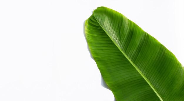 Tropikalny liść bananowca.