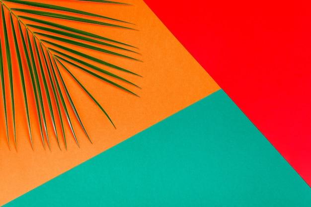 Tropikalny liść na pastelowym tle minimalistycznej koncepcji