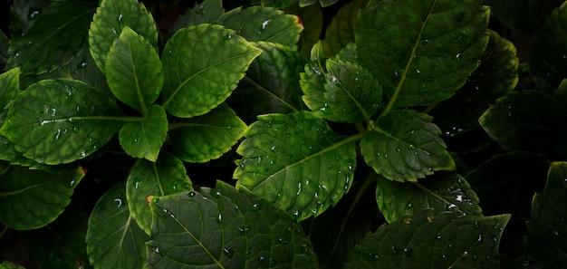 Tropikalny liść o ciemnozielonej fakturze