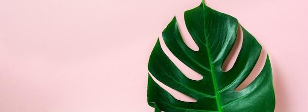 Tropikalny liść palmowy monstera na różowej powierzchni z miejsca na kopię