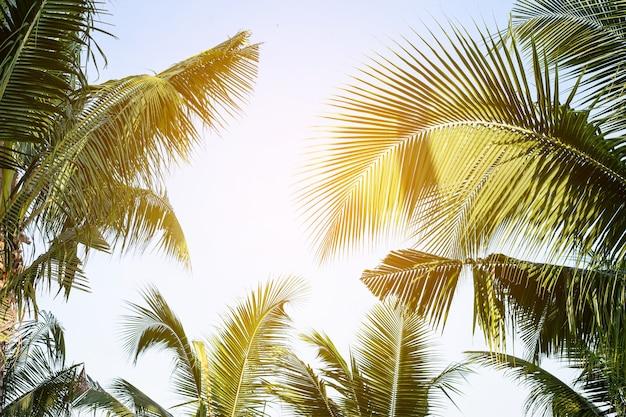 Tropikalny liść palmowy tło palmy kokosowe widok perspektywiczny