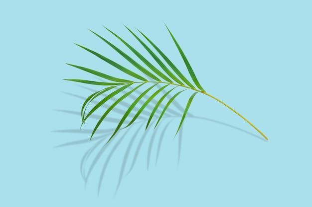 Tropikalny liść palmowy z cieniem na pastelowym niebieskim tle koloru