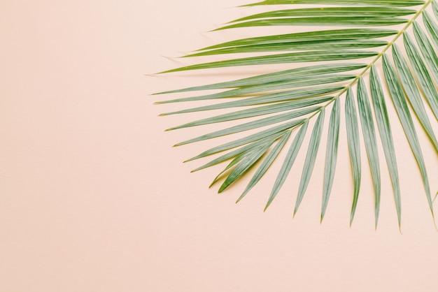 Tropikalny liść palmowy