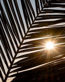 Tropikalny liść z promieniami słońca