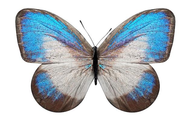 Tropikalny motyl z niebiesko-białymi skrzydłami. na białym tle