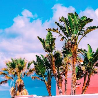 Tropikalny nastrój palmy podróżujące rośliny na różowej zawartości