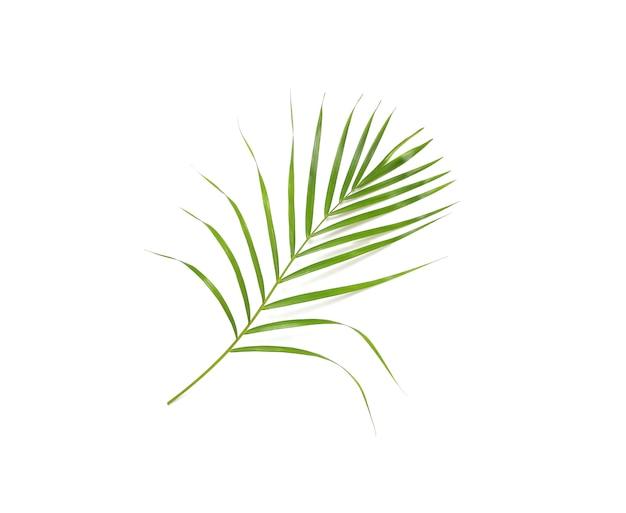 Tropikalny natura zielony liść palmy na białym tle