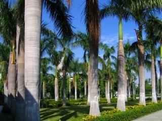 Tropikalny ogród