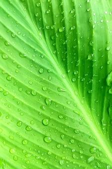 Tropikalny palm zielony liść w kroplach wody