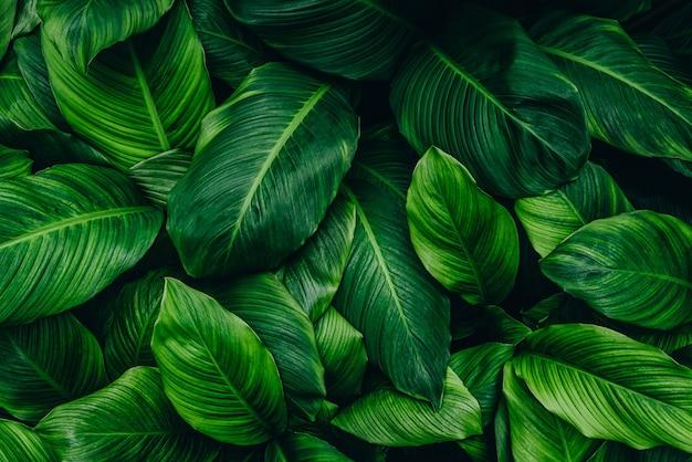 Tropikalny zielony liść na ciemnym tle w naturalnym lesie deszczowym