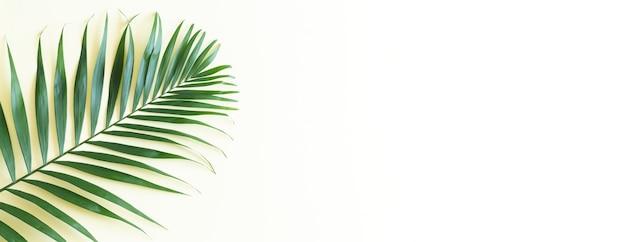 Tropikalny zielony liść palmowy widok z góry na jasnożółtym tle