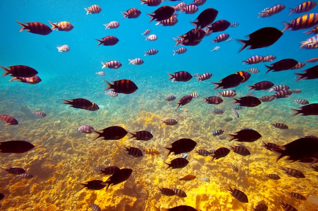 Tropikalnych ryb na obszarze rafy koralowej
