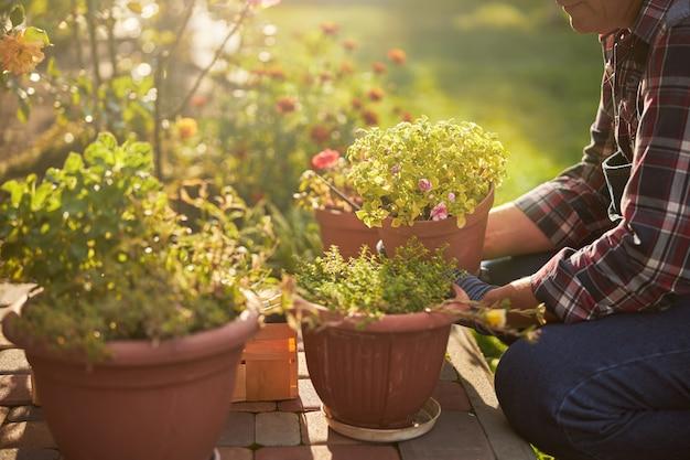 Troskliwy wiekowy ogrodnik pielęgnujący swoje rośliny doniczkowe na zewnątrz w słoneczny dzień