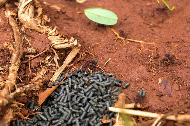 Trucizna jedząca mrówkę