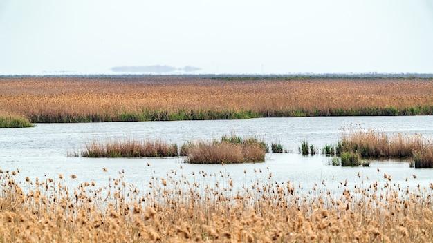 Trzcinowe zarośla nad jeziorem