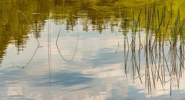 Trzciny wyrastające ze stawu odbijające się w tafli wody, krajobraz