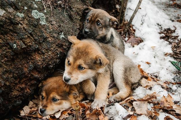 Trzy bezdomne małe zamarznięte szczeniaczki o smutnych oczach na śniegu w lesie w pobliżu starego drzewa zimą. czekam na ciepło, dobra właścicielka.